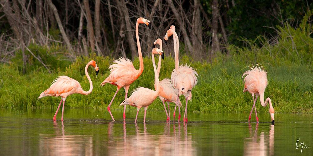 <div class='title'>                    </div>                 <div class='description'>           Discover birds in the Everglades backcountry         </div>