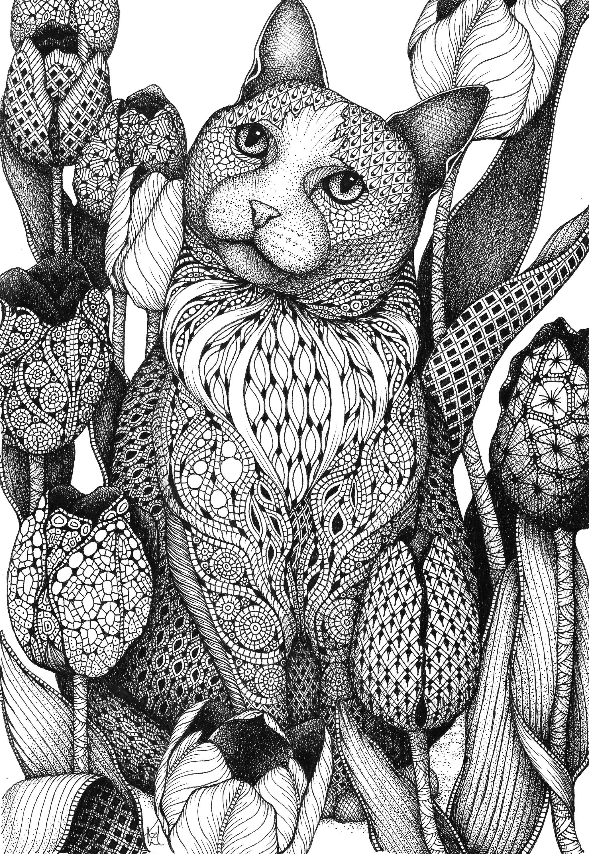 Cat tulips fgljgc