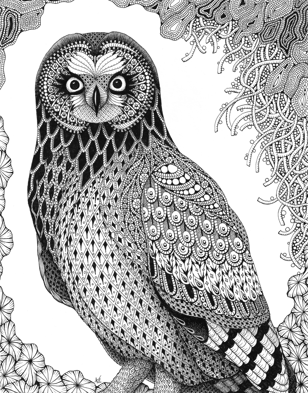Short ear owl gi3tyi