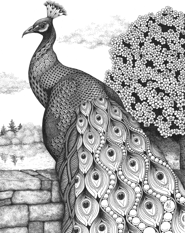 Posh peacock rlkveo