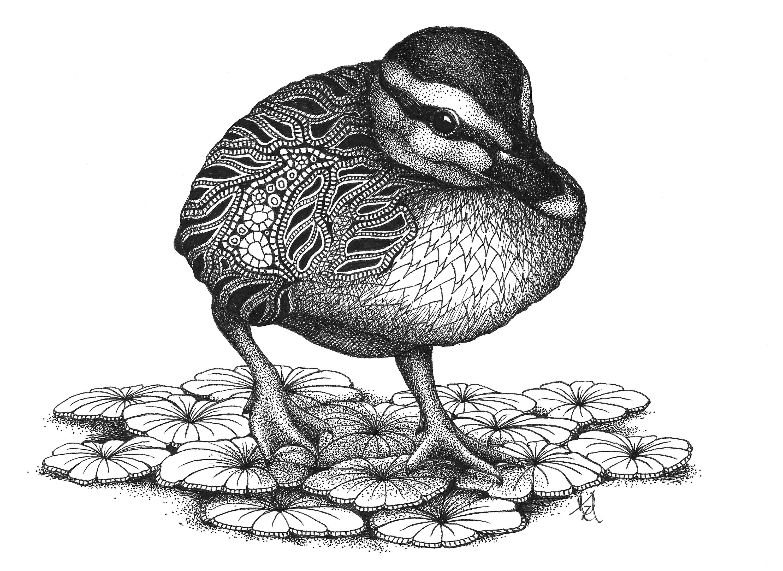 Duckling njsba9