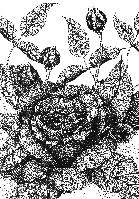 Rose fzsldu