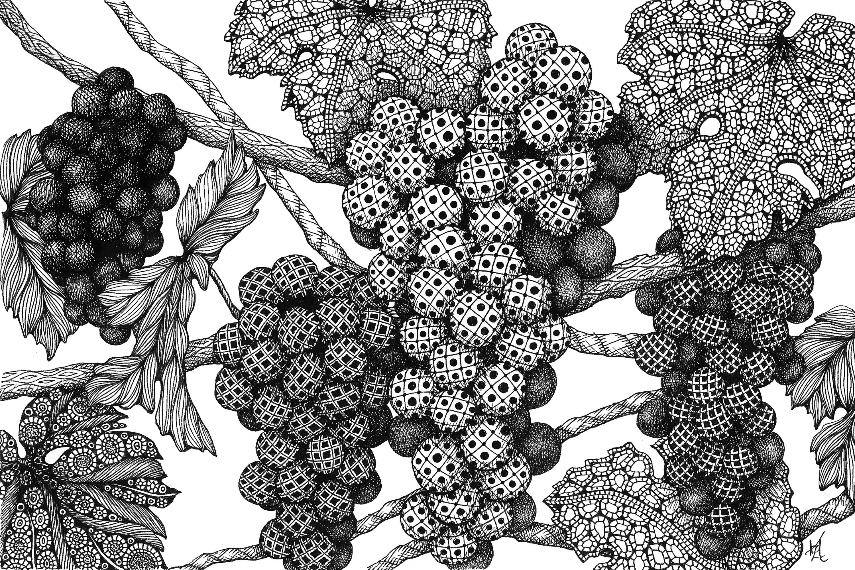 Grapes on the vine ga90er