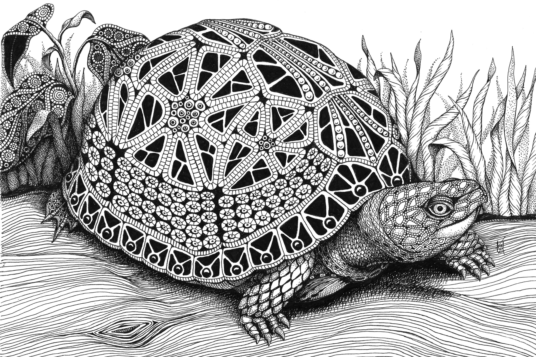 Turtle  box turtle aflnrk