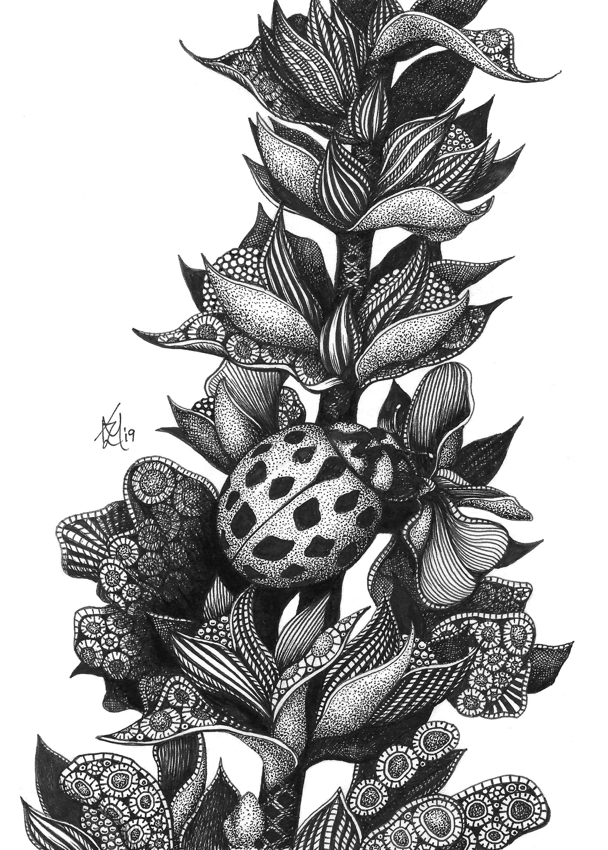Ladybug rmsxxp