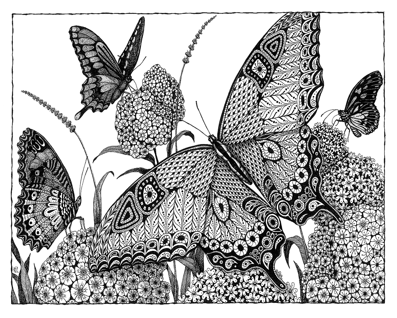 Butterflies d9rncc