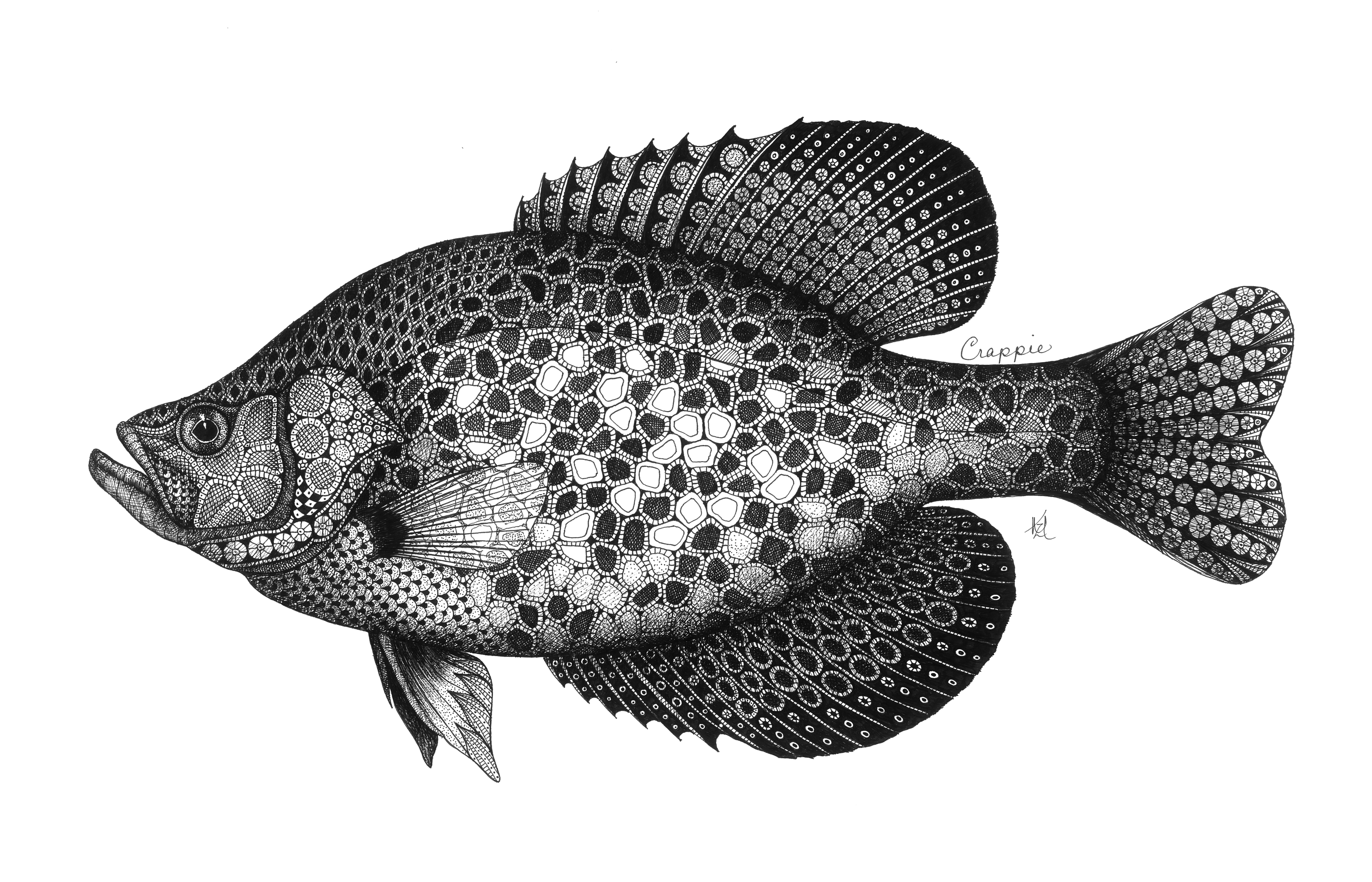 Crappie pveyp3