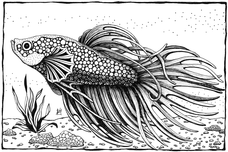 Betta fish ifcml0