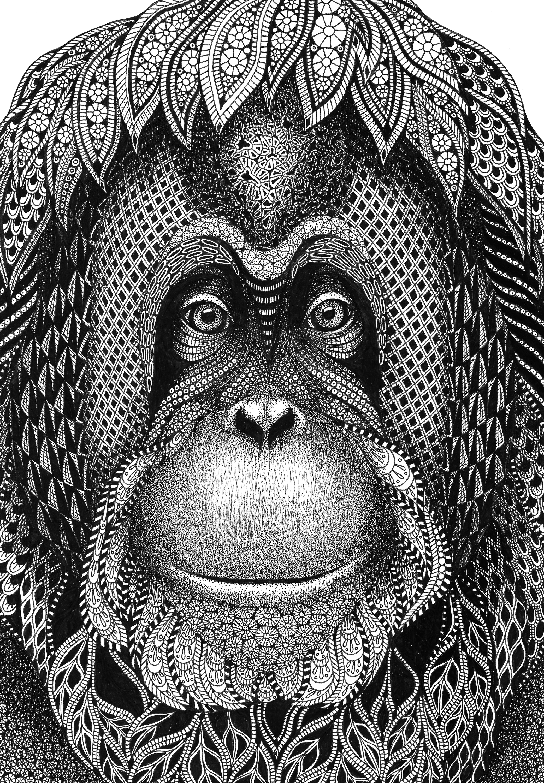 Orangutan  katie cropped tjzpzg
