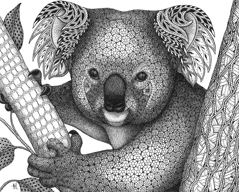 Koala s1pgjh
