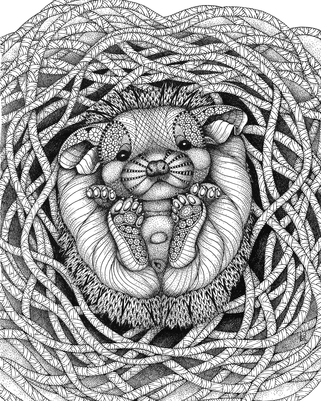 Hedgehog baby o1twvi