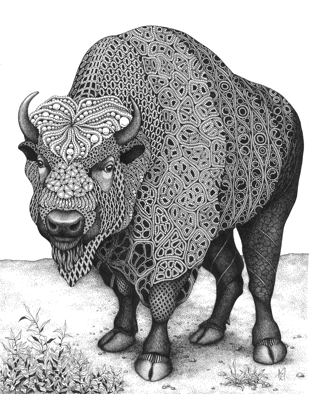 Bison home on the range ze9efu
