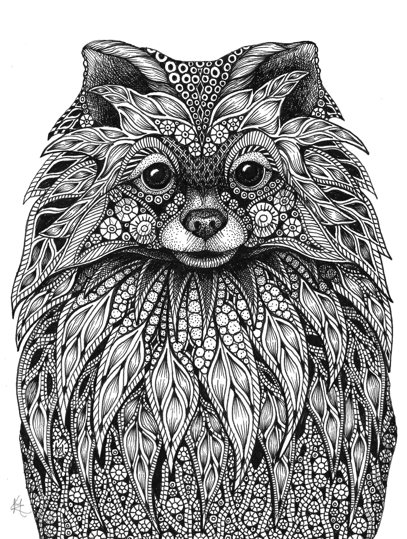 Pomeranian bswmch