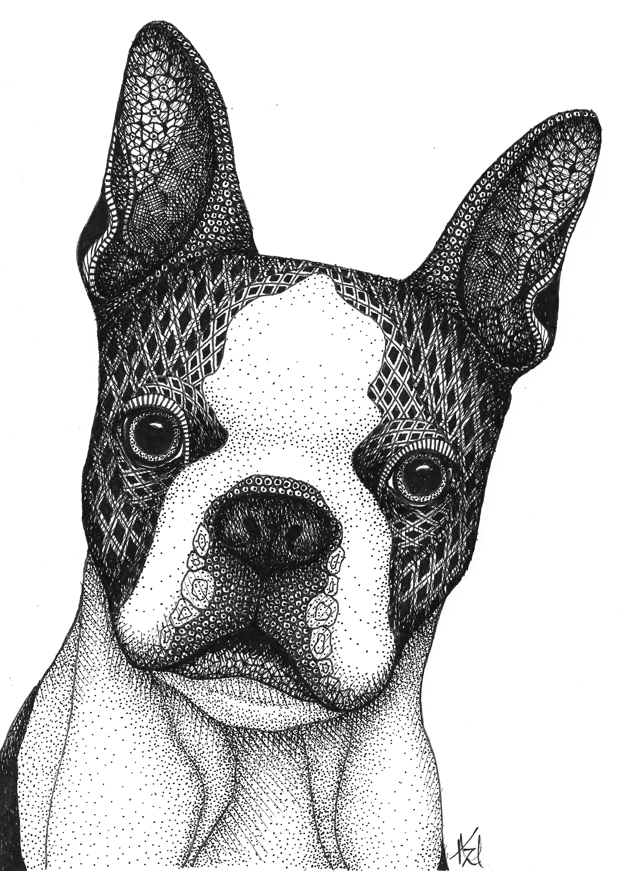 Boston terrier wrkqiy