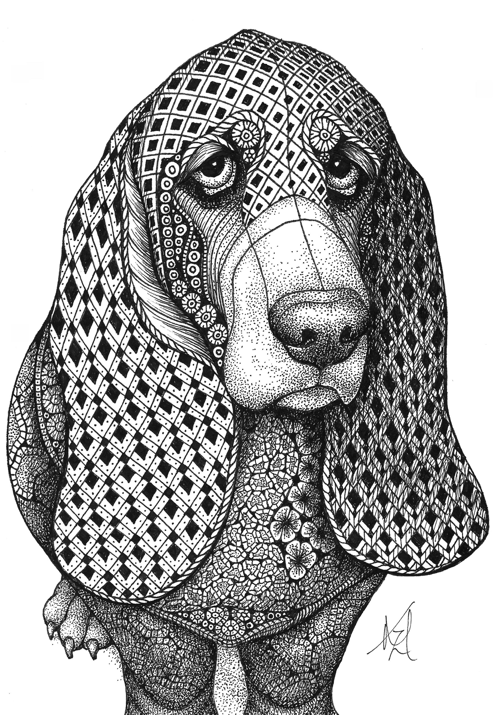 Bassett hound vesqfk
