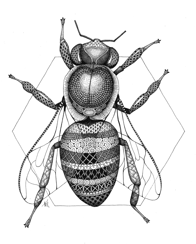 Honeybee vyp9ob