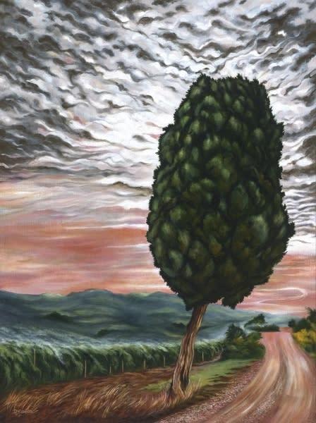 Cypress tree on the road to tuscany euac9o