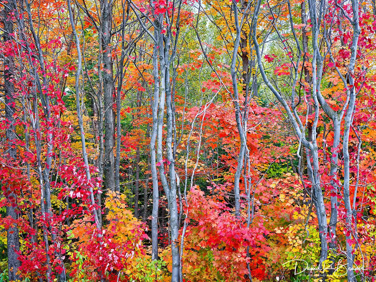 Autumn blaze sszry2 qn2qeb