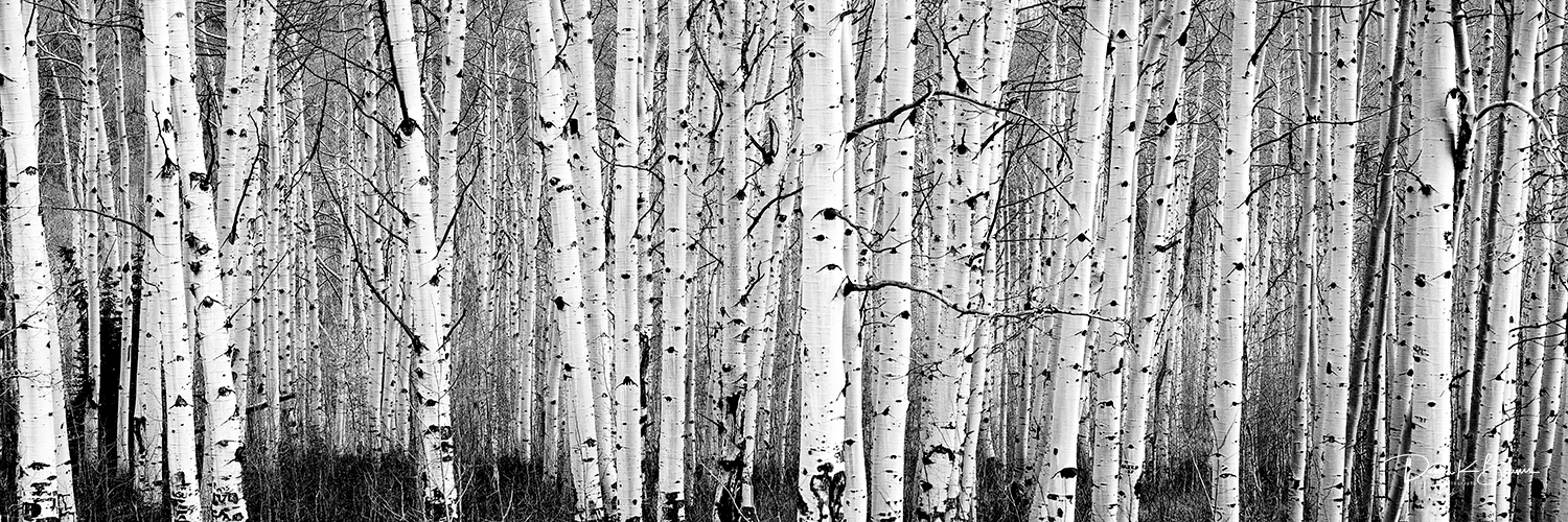 Aspens black and white 3 to 1 z5bco2 klspbq