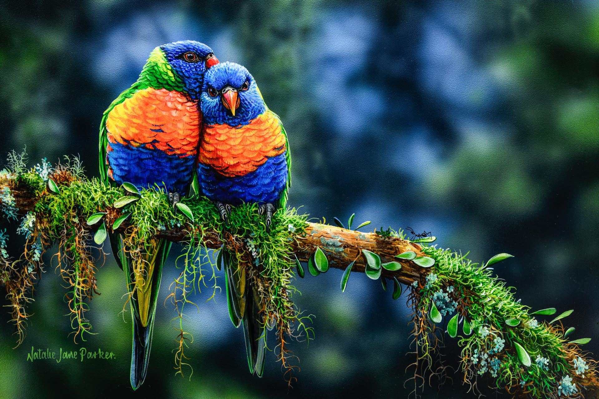 Morning snuggles   rainbow lorikeet natalie jane parker australian native wildlife mfjjum