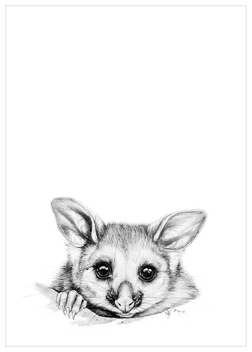 Possum   pencil drawing print files   a4 m6c3ff