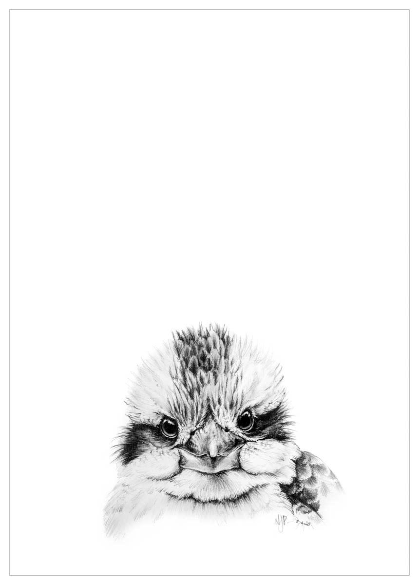 Kookaburra   pencil drawing print files   a4 nzfihv