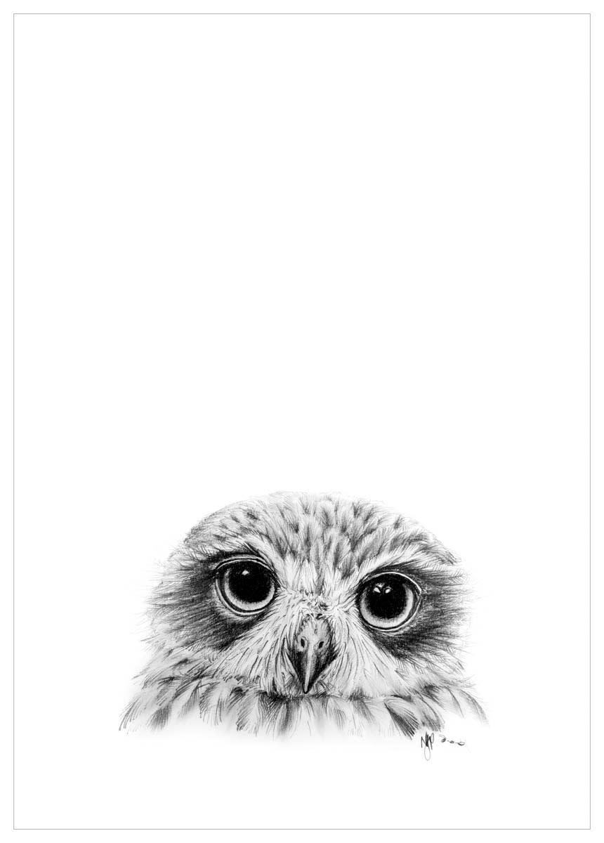 Boobook   pencil drawing print files   a4 vraiok