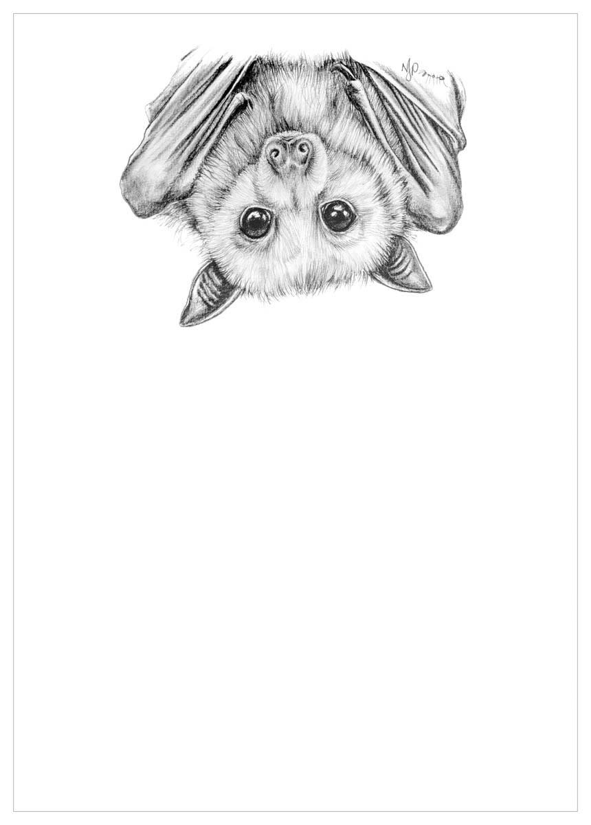 Flying fox   pencil drawing print files   a4 jdfsh0