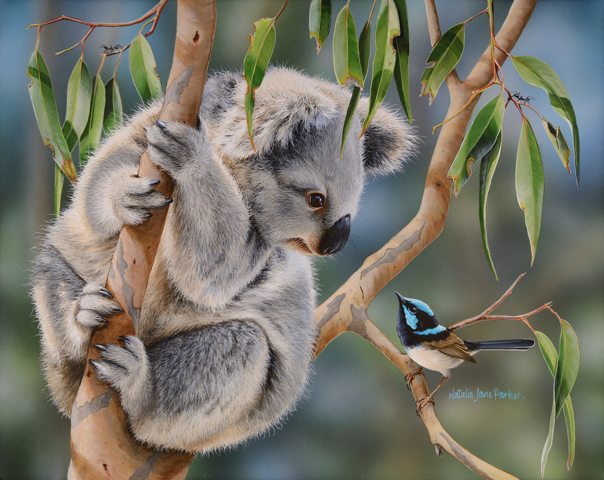 Aussie greeting   juvenile koala and superb fairy wren natalie jane parker australian native wildlife zfn2yx
