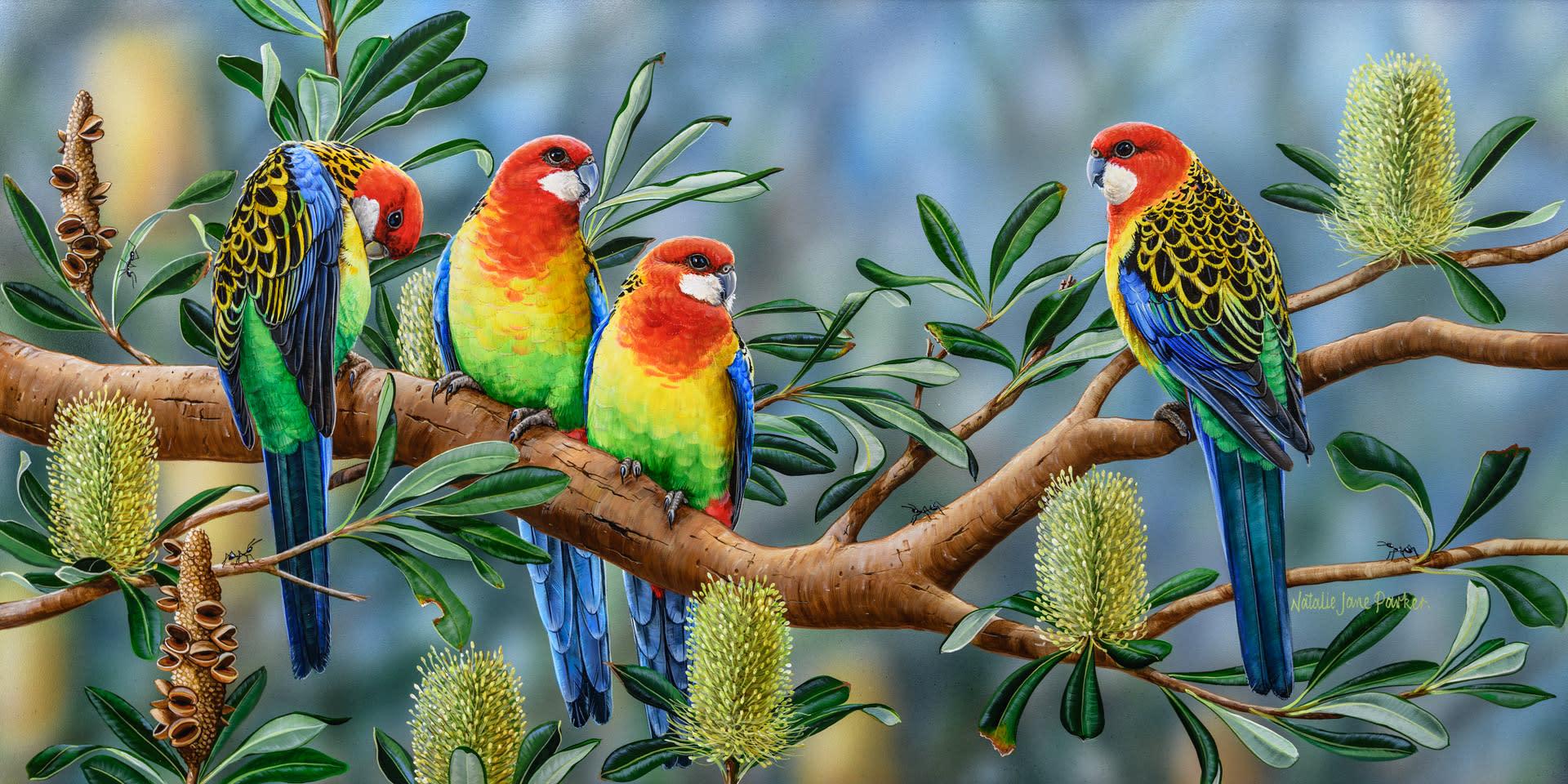 Banksia friends   eastern rosella natalie jane parker australian native wildlife nvqv23