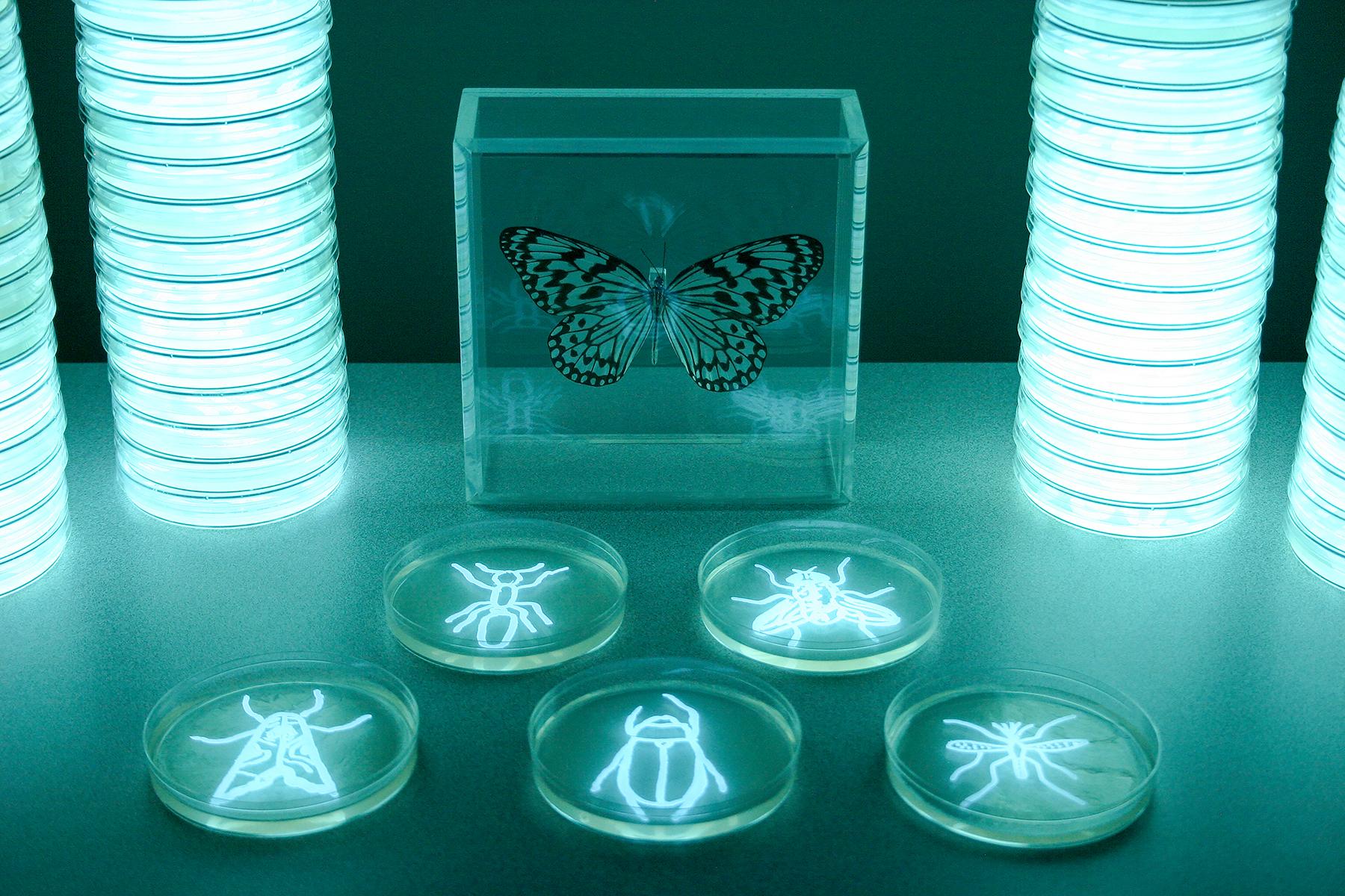 Insecta ou9jha