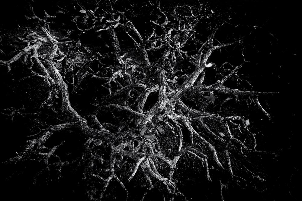 Tree 1 le xxzmb4