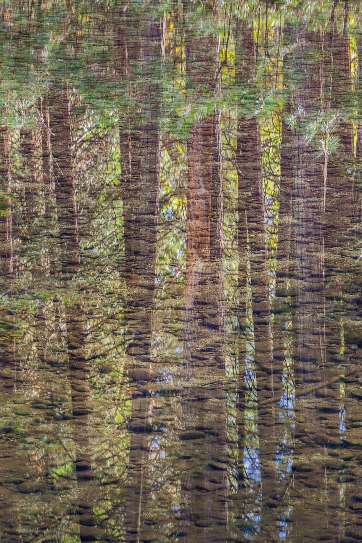 River bottom and pine reflections 2014 tmu0ff