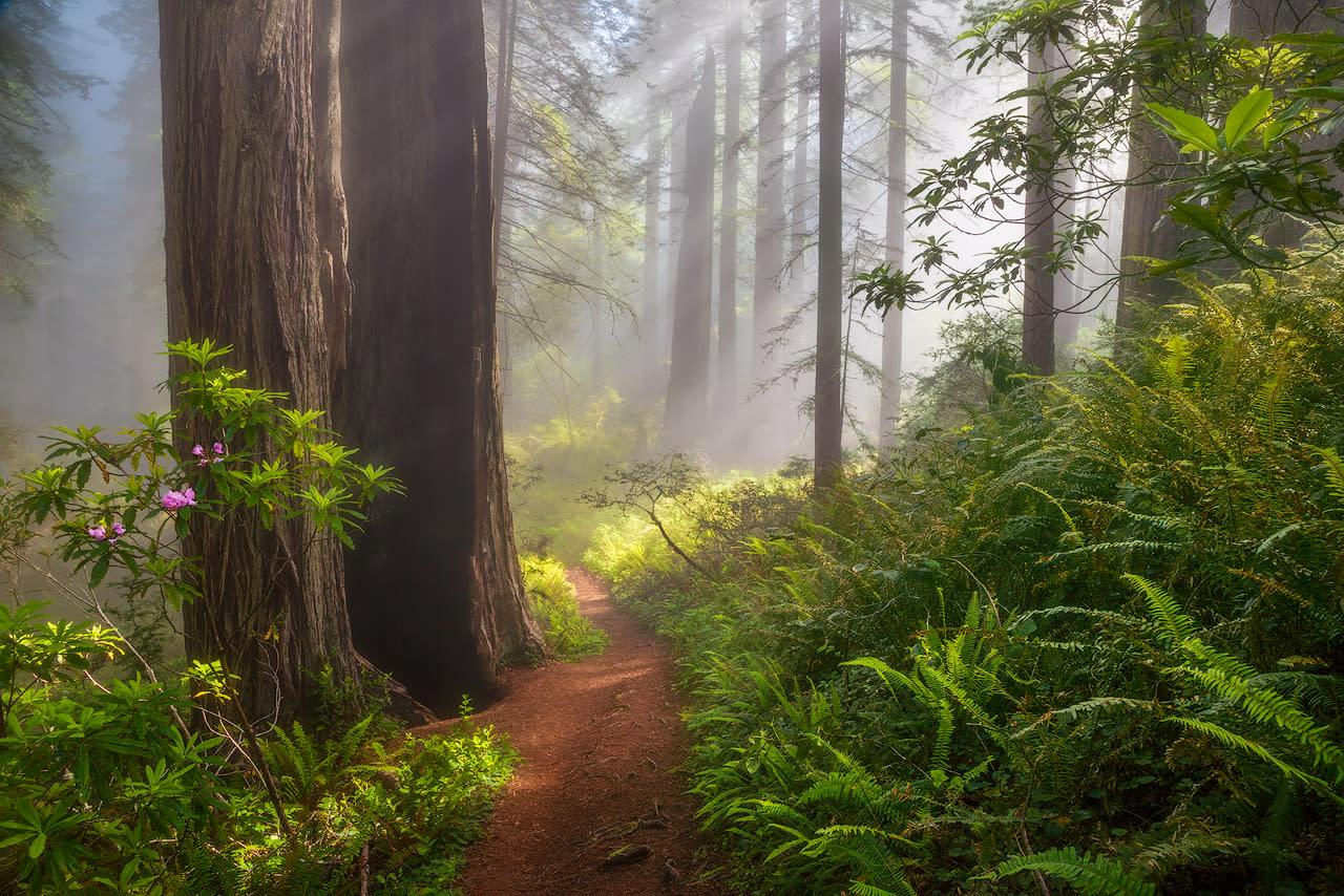 Path through the redwoods2 jcgo3j