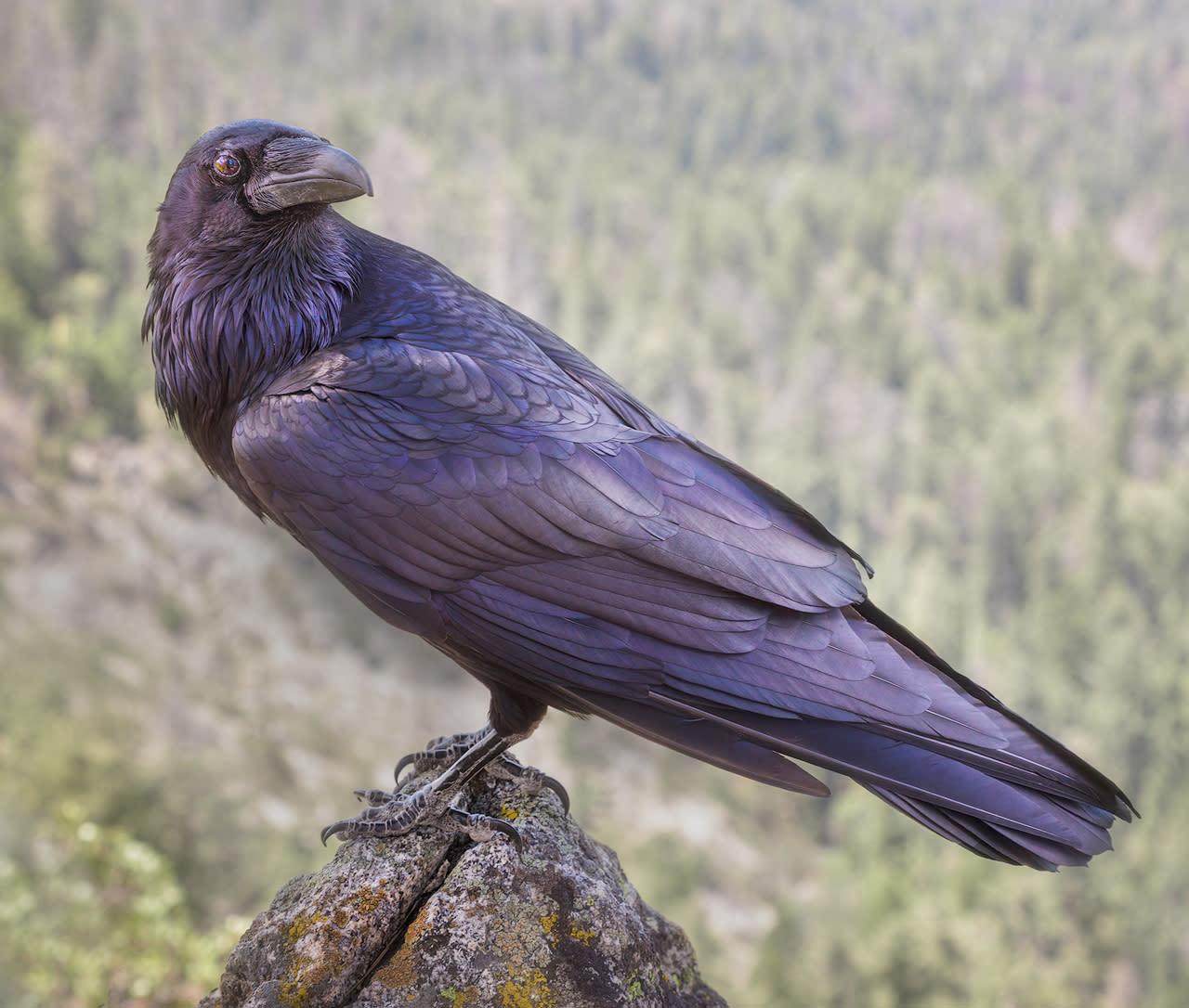 Spirit bird ngqbg4