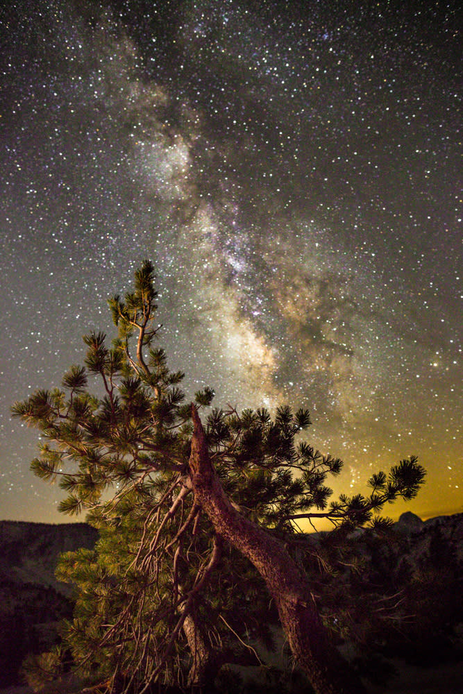 Pine and milky way tgvwxk