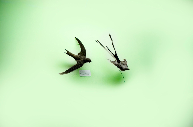 Birds rzhdt5