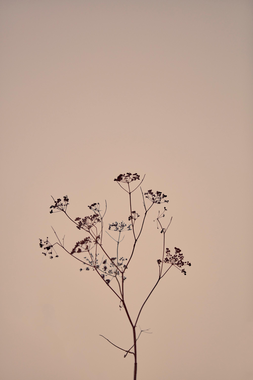 Botanical hgw0n1