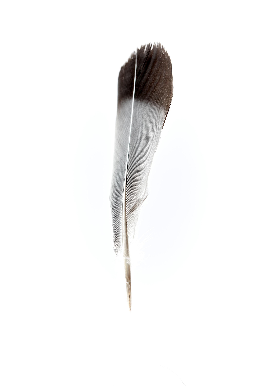 Feather dvqap1