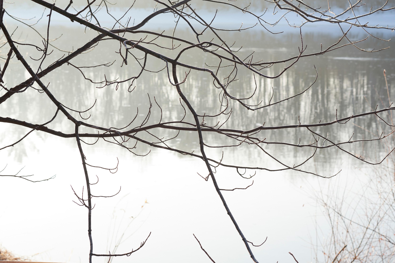 Flambeau branches vljgvd