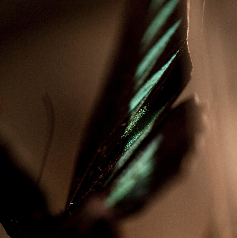 Green butterfly emcdkt