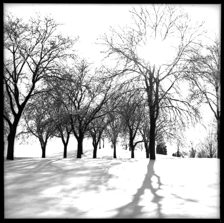 Lakewood trees oogzo0