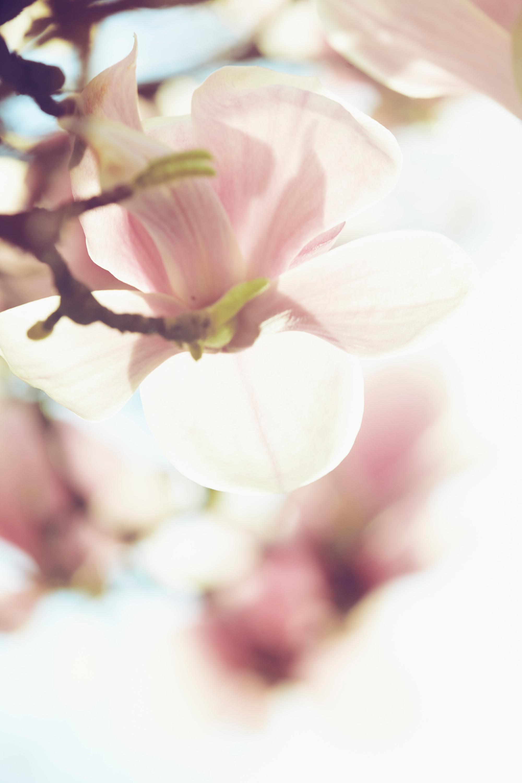 Magnolia gmt38j