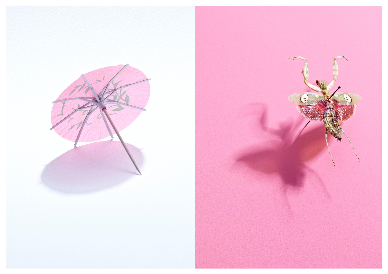 Umbrella bug uhtdg1