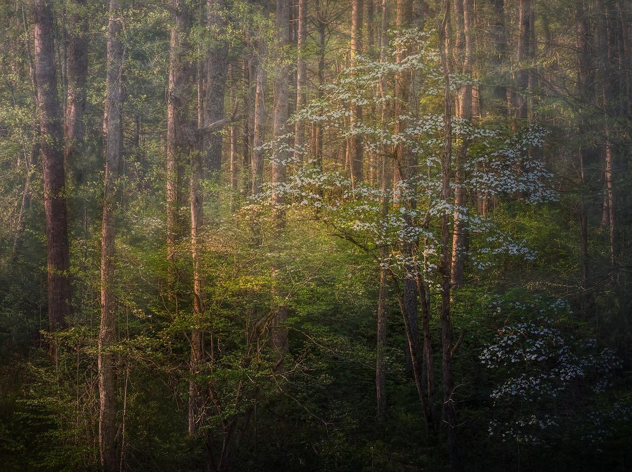 Smoky mountains spring k89wg2