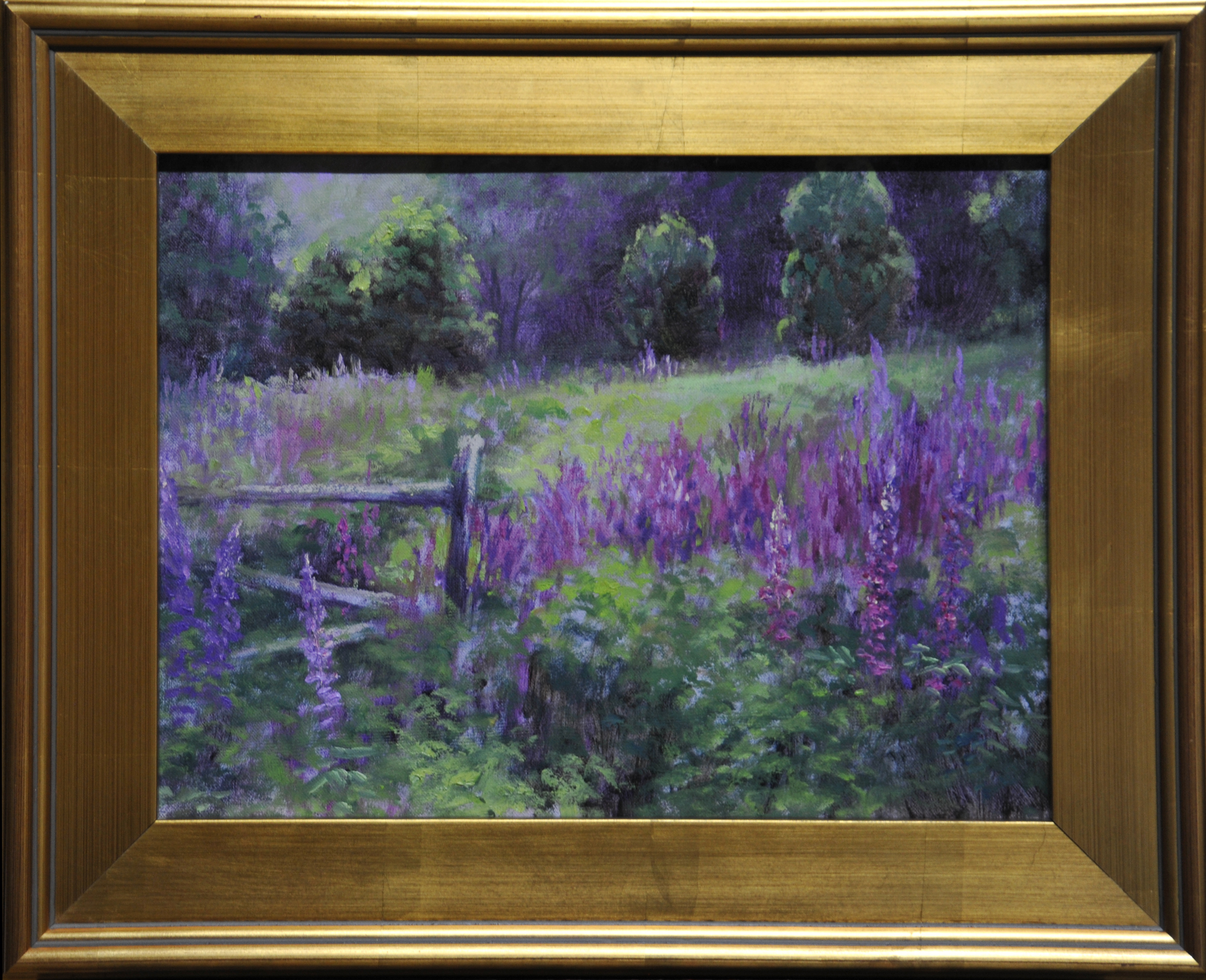Lupine fields framed zrx6ur