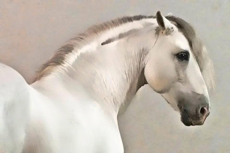 Horse white w8fdk6