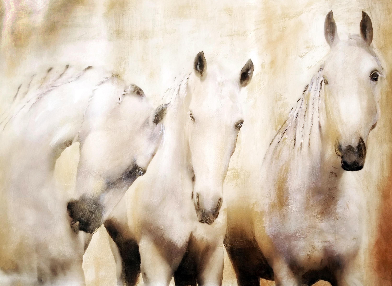 White stallions zv79q4