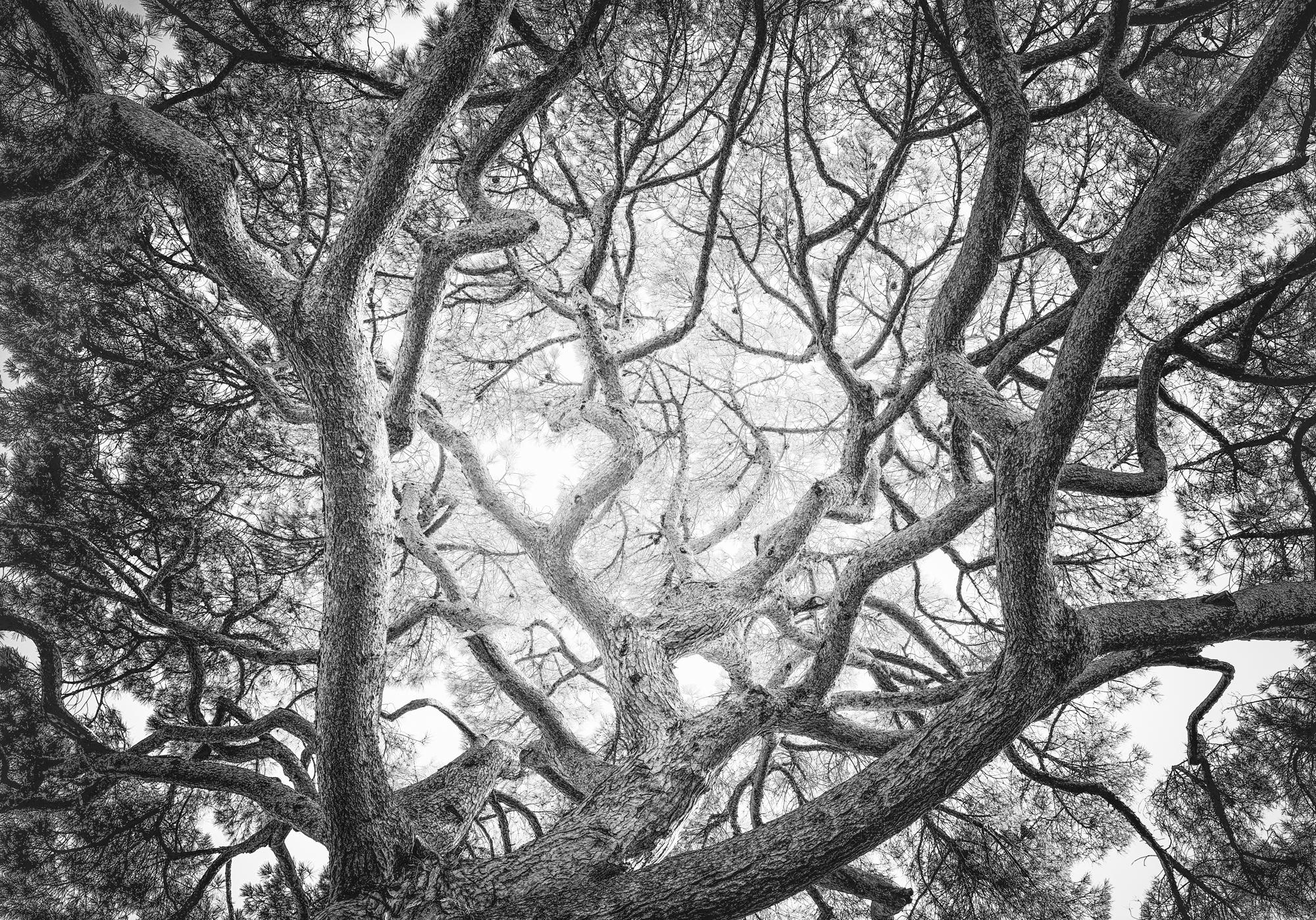 Tree 60 growing into the expanse e6rqpi