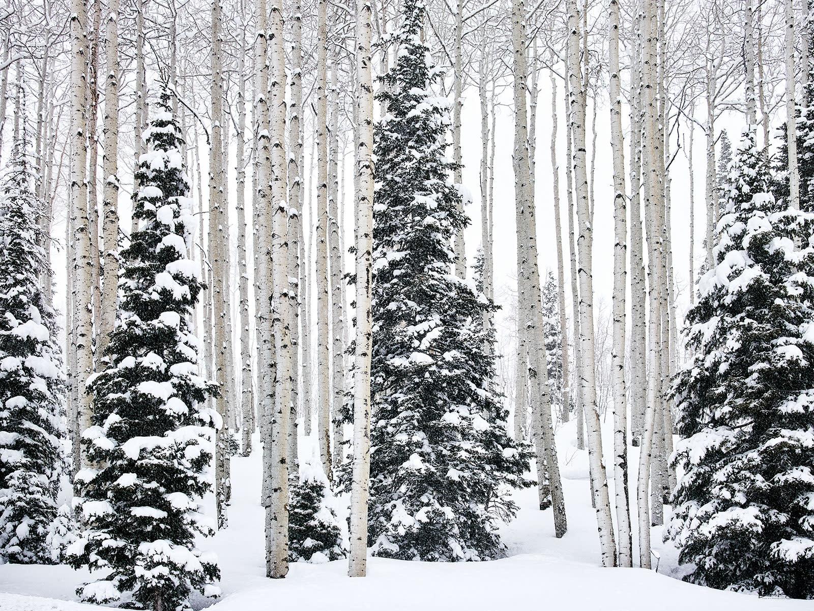 Winter forest bsna7w